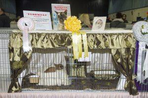 Burmese Cat Club show 2018