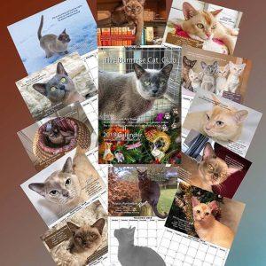 The Burmese Cat Club Calendar 2019